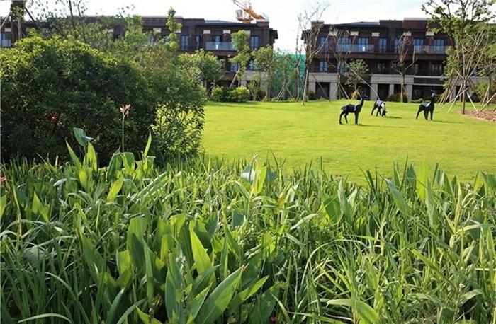 惠州大亚湾万达广场旁边的牧马湖价格有降了?开发商泰丰集团怎么样?